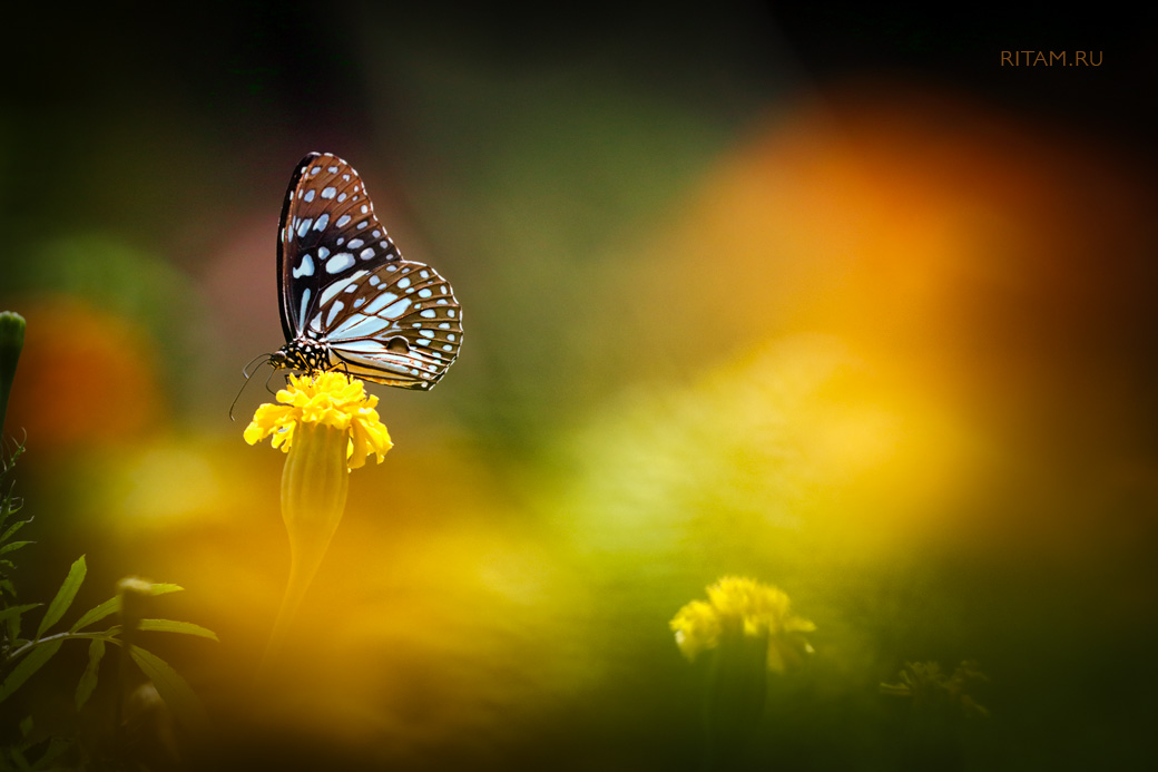 Butterfly_Realm_-_Ritam_W