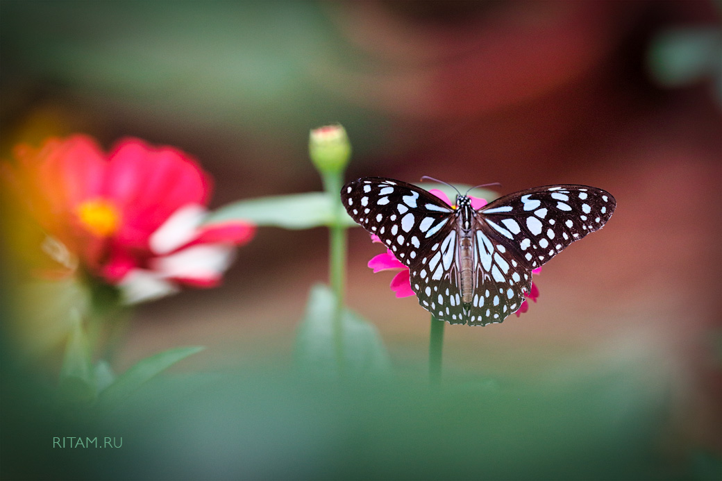 The_Butterfly_Cosmos_-_Ritam_W