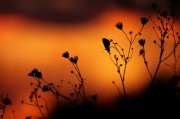 Butterfly_in_the_glow_of_sunset.jpg