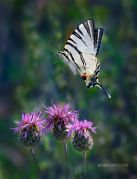 Summer-Flight_Ritam-W.jpg