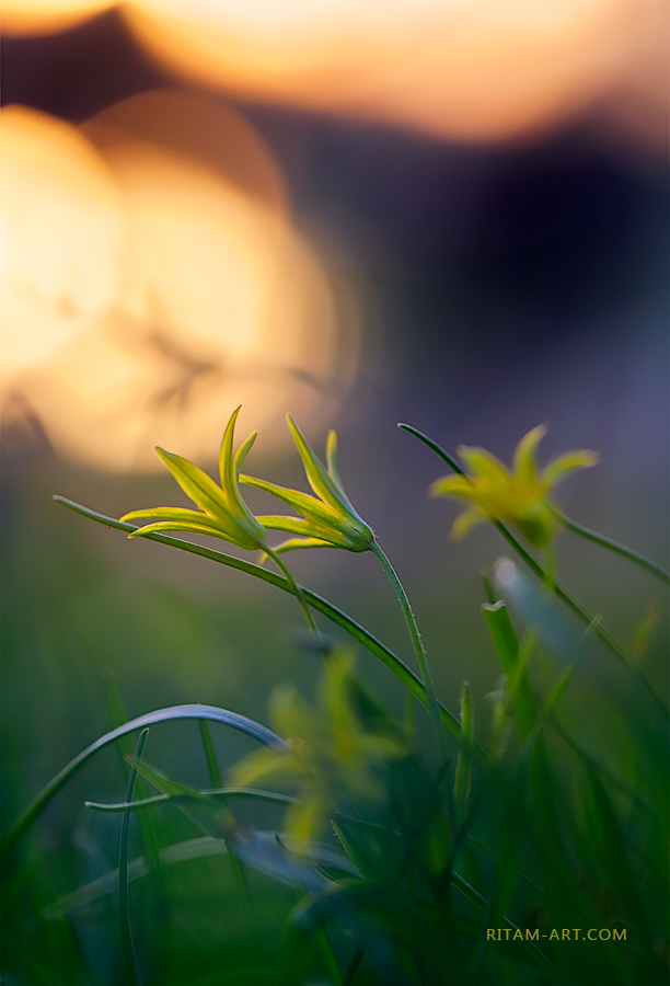 Spring_Sunset-Melody_Ritam-W