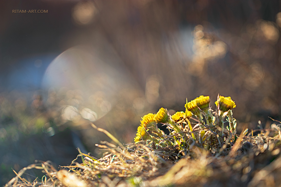 The-First-Born-of-Spring-2_Ritam-W