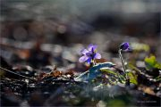 Shine-of-Spring_First-spring-flowers_Ritam-W.jpg
