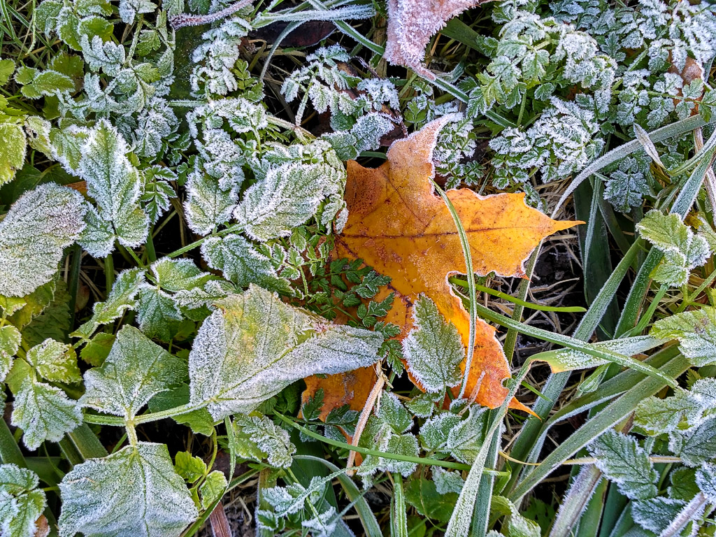First-Frost_Ritam-W